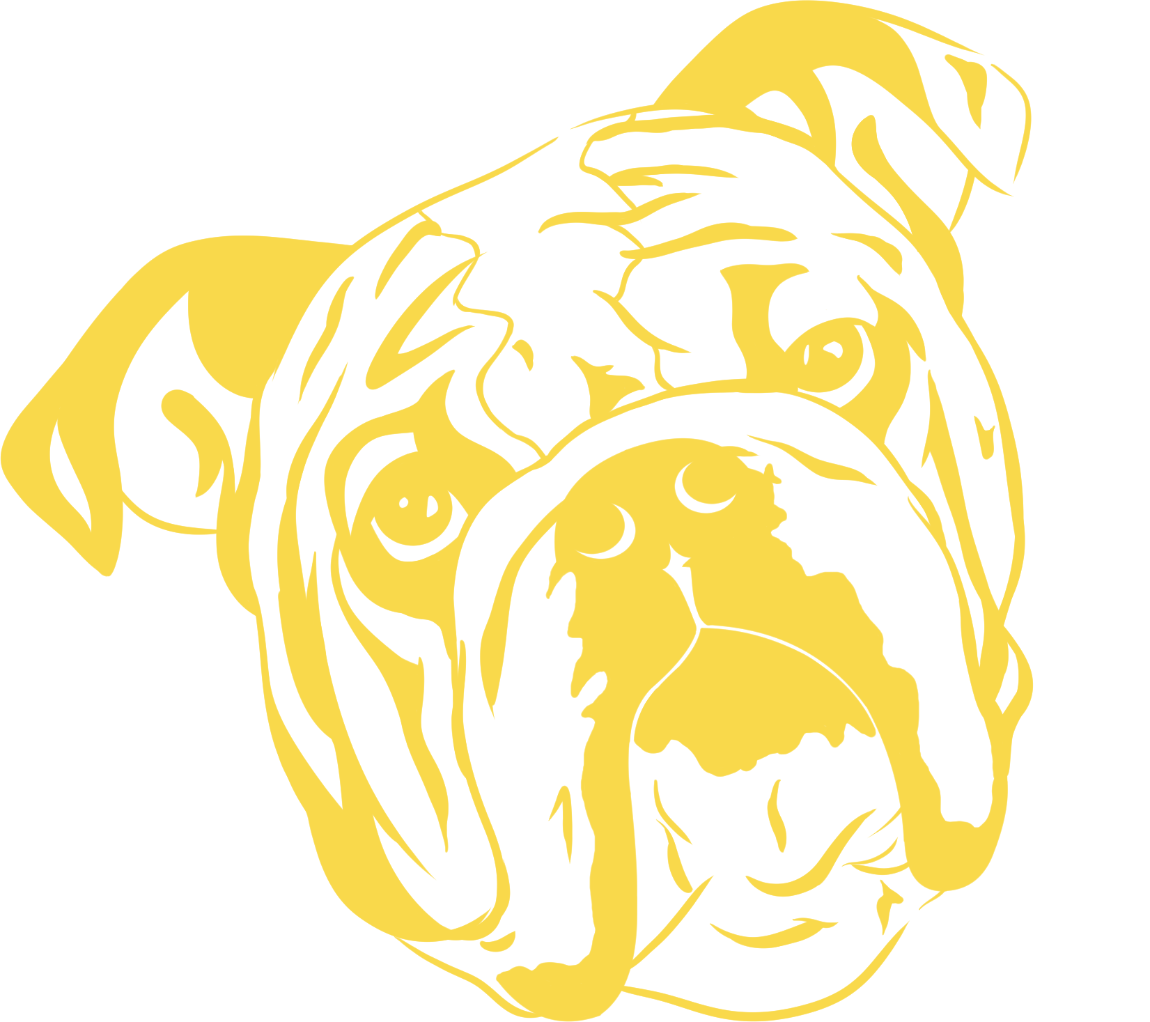 bulldog sketch yellow