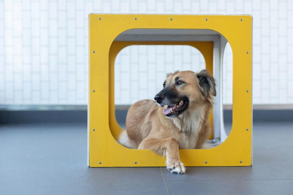 District Dogs Daycare Dog