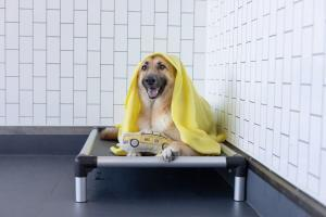 Dog boarding with blanket