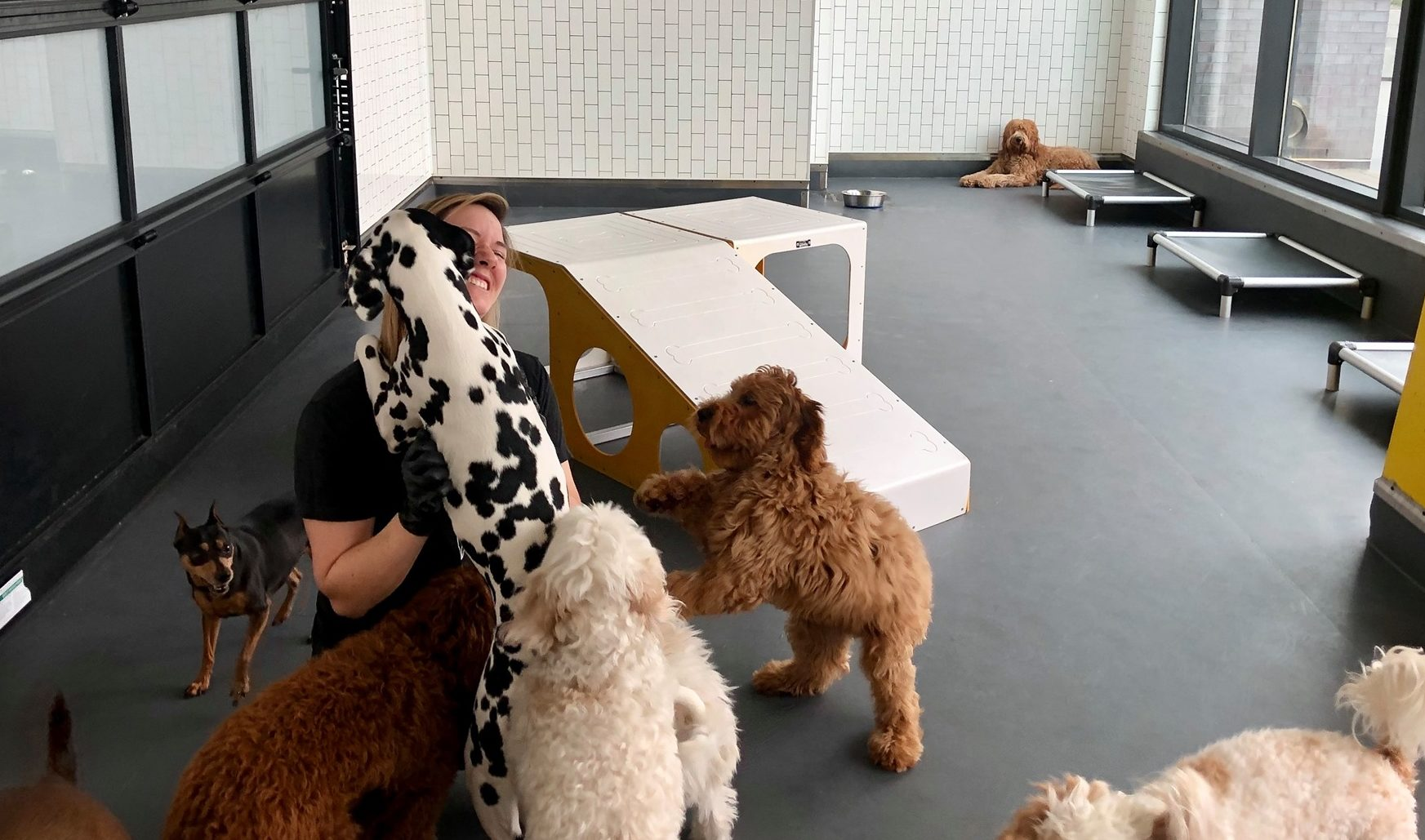 District Dog Daycare Playtime