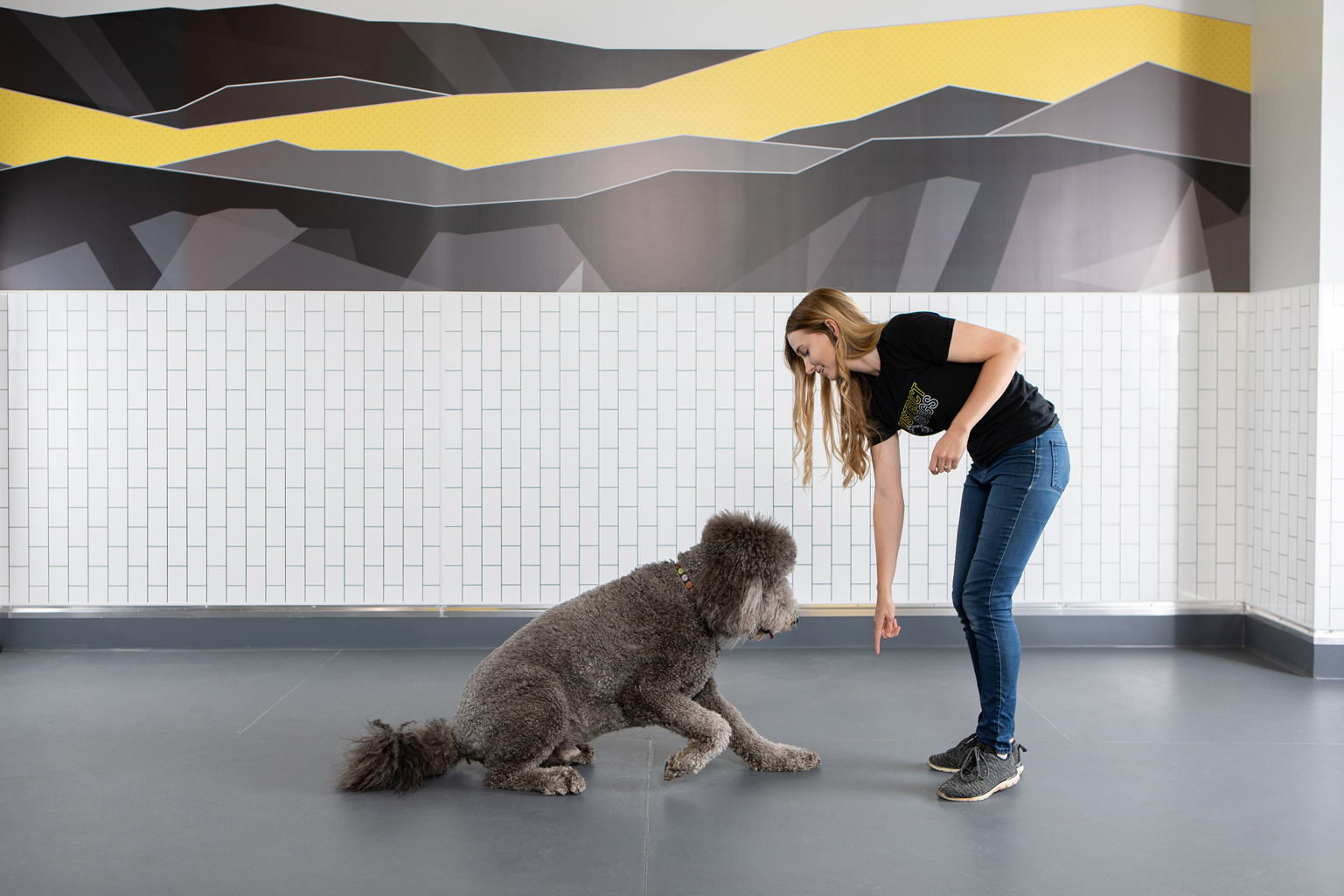 District Dog Training DC